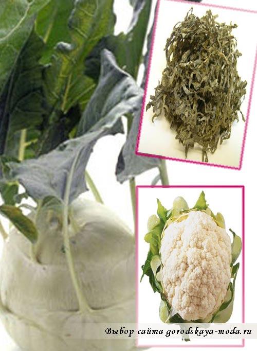 Миниатюра к статье Кольраби, морская, савойская - разновидности капусты и рецепты из нее