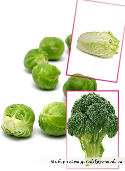 брокколи и кольраби фото