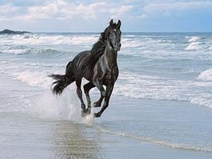 китайский гороскоп на год лошади